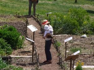 Jardin-tinctoral